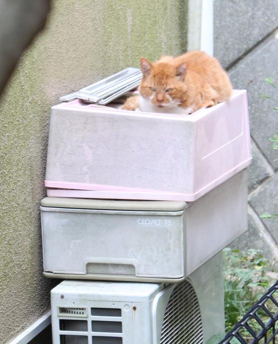 茶とら猫 リラックス