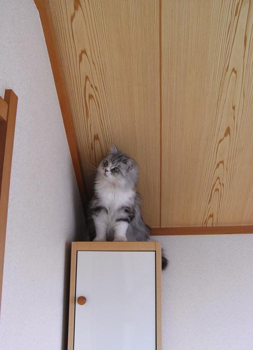 猫のパール画像-1