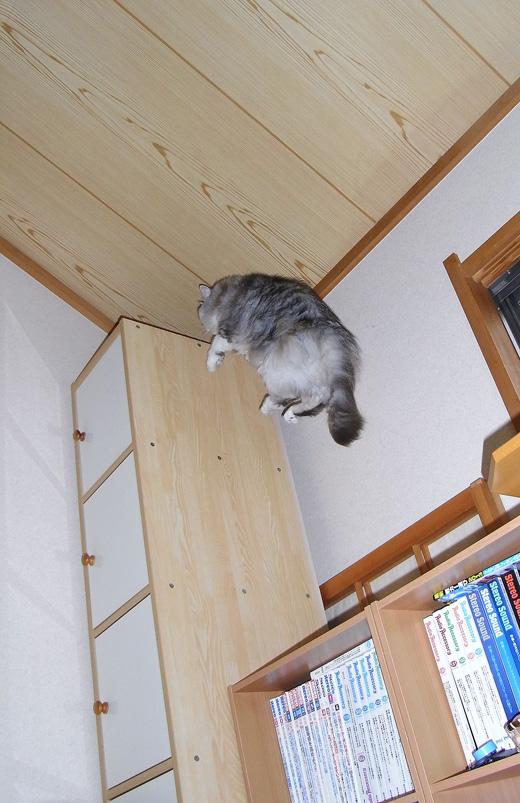 猫のパール画像-ジャンプ