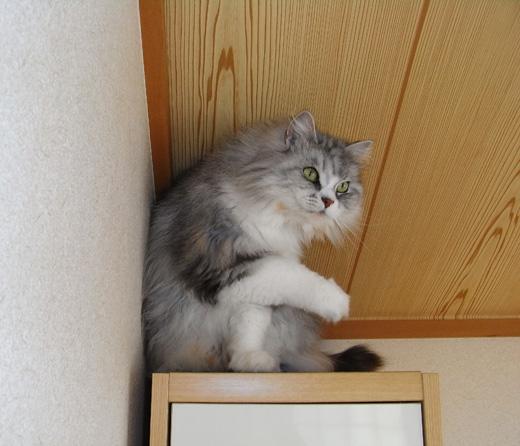 猫のパール着地成功